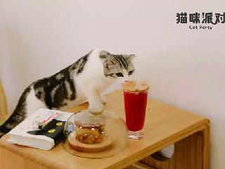 你认为猫咪派对有这么简单就火起来吗?